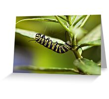 Monarch caterpillar Greeting Card