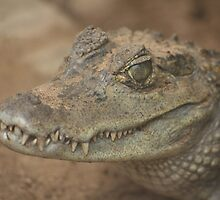 crocodile by markwalton3