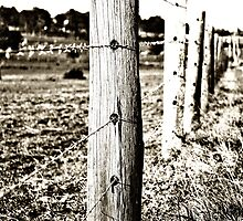 Morpeth Fence by tonilouise