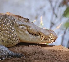 wild crocodile samburu by sijones