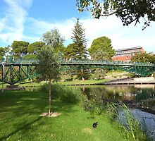 University Footbridge! Parklands, Adelaide C.B.D. by Rita Blom