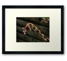 A new fern is born......! Framed Print