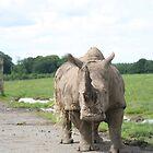 Ronnie Rhino by markwalton3