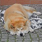 Dog Tired by Graeme  Hyde
