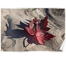Deep Red Maple Leaf Poster