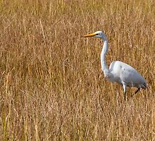 Great Snowy Egret by Dawn Crouse