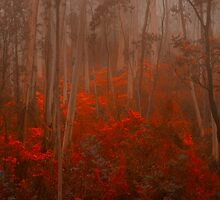 Experiments in Processing # 1 - Mount Wilson NSW - The HDR Experience by Philip Johnson