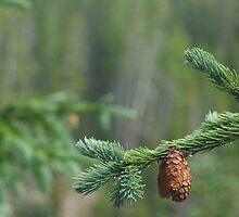Neota Pines by Nate Welk