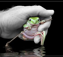 Tree frog by Jeff Davies