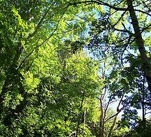 Woodland Wonderland by Stevie Toye
