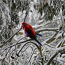 Snow Rosellas by Julie Just