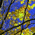 Sunny Yellow Leaves with Branches by Pamela Burger