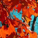 Red Fall Leaves by Pamela Burger