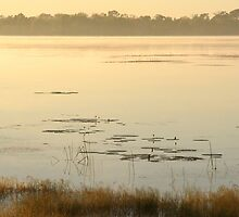 Dawn at Mamukala Wetlands, Northern Territory by Martin Pot