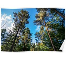 Autumn sunshine through the trees in Longleat Forest Poster