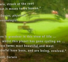 Contemplating Darwin by Marilyn Cornwell