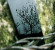 Tree-Black mirror and cold weather by achluofobia