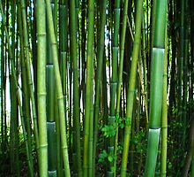 see thru bamboo by regina