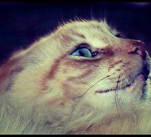 Scaredy Cat by StephanieMasone
