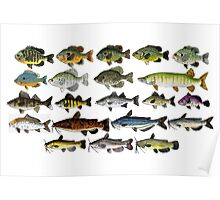 Freshwater Fish Group Poster