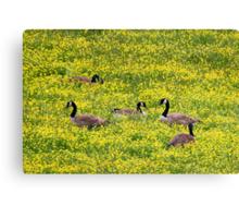 Springtime Gathering Canvas Print