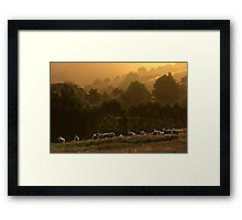 Rim Light - Gippsland Framed Print