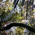 jungle adventure by kaylee roderick