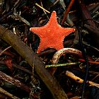 Starfish Amongst Debri by Ryan Watts