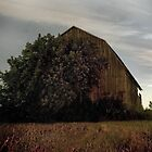 The Barn by Stephen Greensides