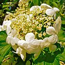 Crown of White flowers by Shulie1