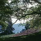 Another patch of hillside above RydalWater Rydal Lake District England 198405200014 by Fred Mitchell