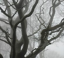 Foggy Trees by Luke Winter