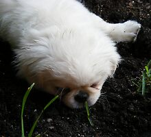 precious petunia by wanda blake