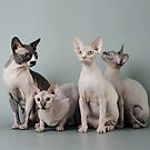 Flesh Cats by BadBehaviour