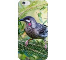 Red Wattle Bird 2 iPhone Case/Skin