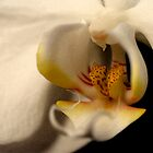 Macro Orchid by Leigh Ann Pobiak
