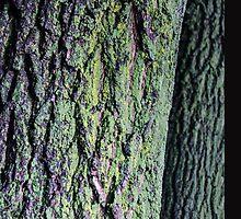 Tree Trunks by Jantzens