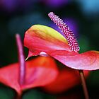 anthuriums by ANNABEL   S. ALENTON