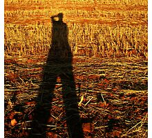 sun on the stubble by David Rozario
