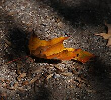 Falling Leaves by Vonnie Murfin