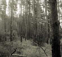 Vintage Photo of Pine Forest 2 by AnnArtshock