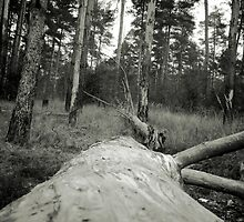 Vintage Photo of Pine Forest 4 by AnnArtshock