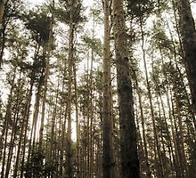 Vintage Photo of Pine Forest 7 by AnnArtshock