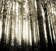 Vintage Photo of Pine Forest 8 by AnnArtshock