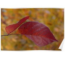 The Warm Glow of Fall - a Horizontal View Poster