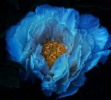 blue for you by lucyliu