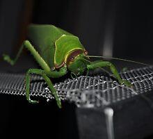 Big and Green by Greg Birkett