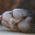 Dog Paw by LunarLioness