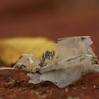 Skeleton Leaf by LunarLioness