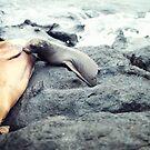 Nursing Sea Lion by Solefield